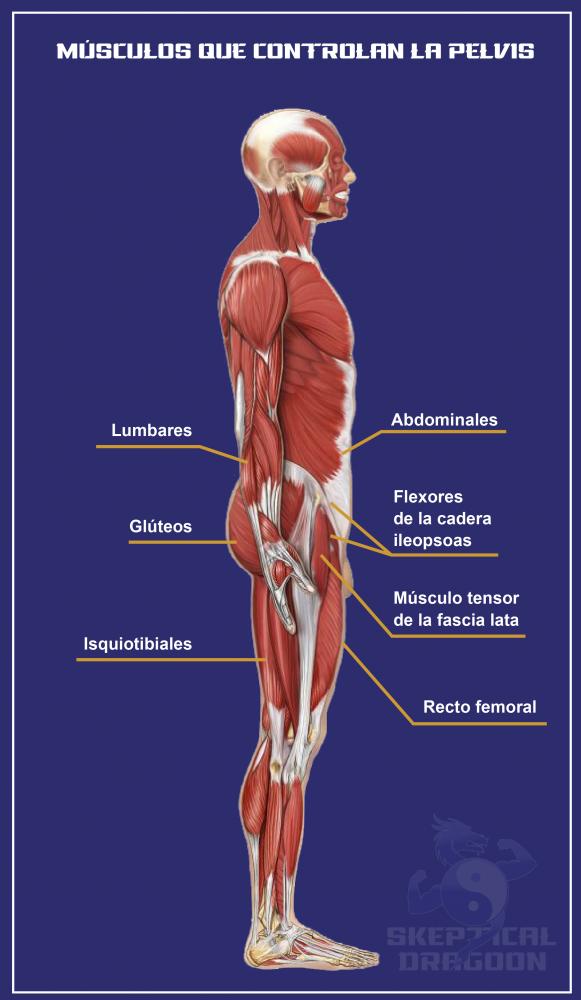 músculos pelvis hiperlordosis