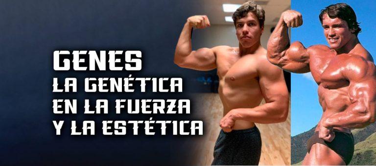 Genes – La genética en la fuerza y la estética