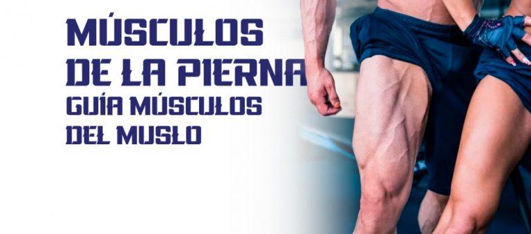 Músculos de la Pierna – Guía músculos del muslo