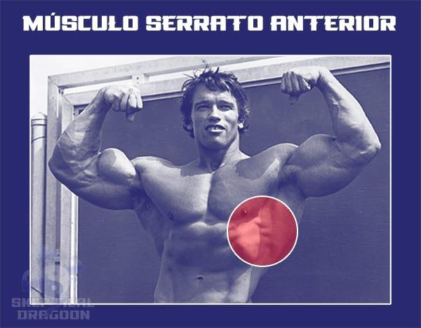 músculo serrato anterior