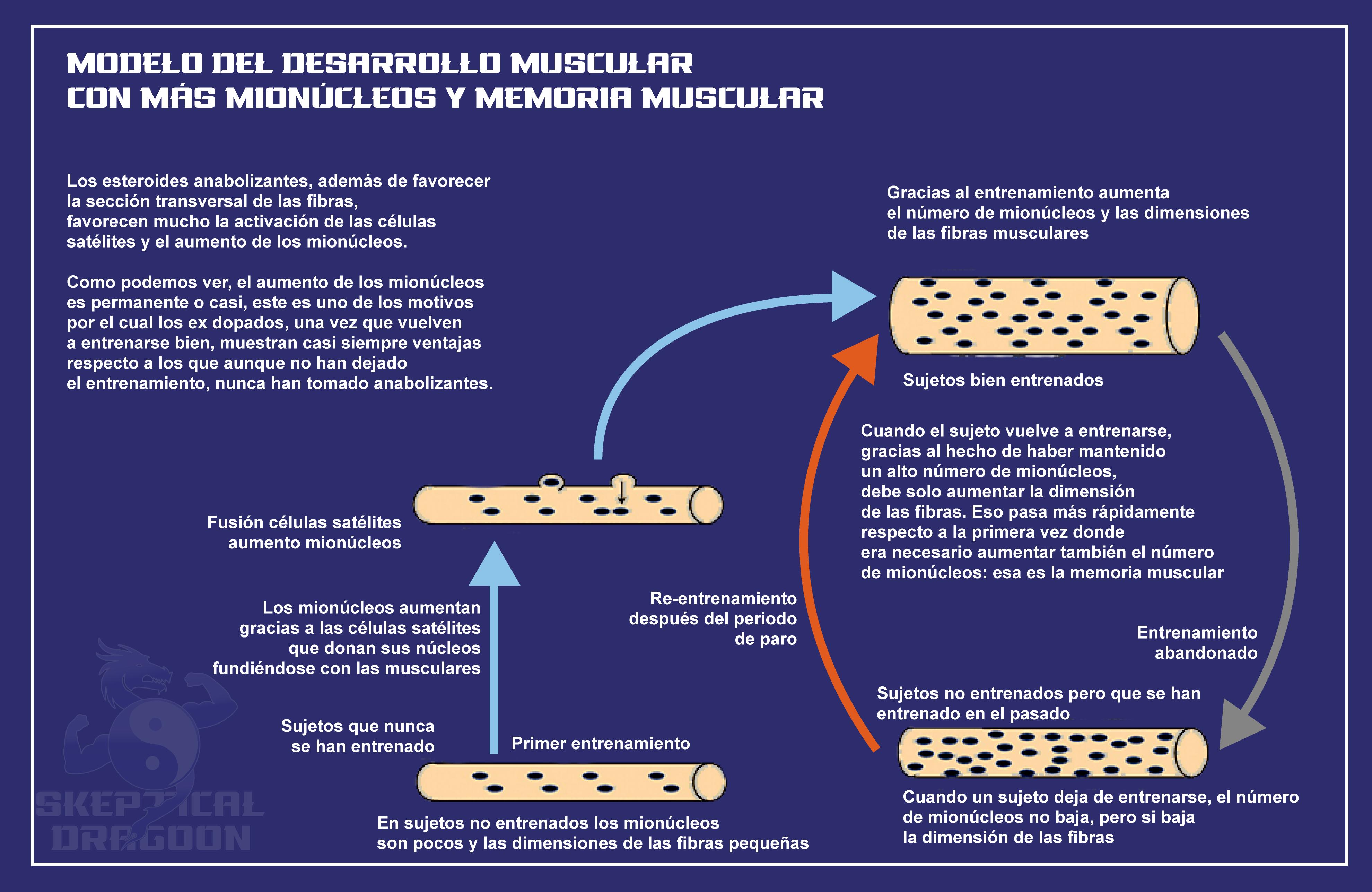 memoria muscular 2