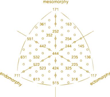somatotipo ectomorfo mesomorfo endomorfo