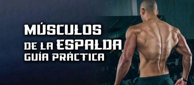 músculos de la espalda guía práctica